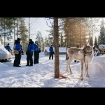 Lapónia Finlândesa, Helsínquia e Estocolmo 11 dias / 10 noites 34
