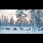 The Northern Lights in Finland - Kakslauttanen 3 days/2 nights 4