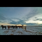 Winter Fantasies and Boreal Auroras of Iceland 8 days and 7 nights  22