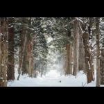 Lapland Experience of Finland in Kakslauttanen 5 days/4 nights 9