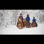 The Northern Lights in Finland - Kakslauttanen 3 days/2 nights 17