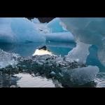 Greenland Summer Adventure  5 days/4 nights 11