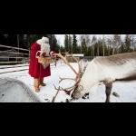 Aurora Borealis na Finlândia - Rovaniemi 7 dias/6 noites 31